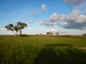 Okavango sky and grasslands