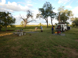 Setting camp in Moremi