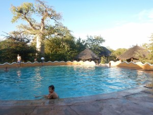 Pool at Planet Baobab. Note the gorgeous baobab tree in the upper left of the photo.