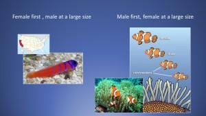 Fish that change sex that