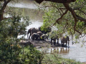 Kruger elephant family.